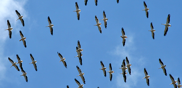 migration birdwatching tours in bulgaria