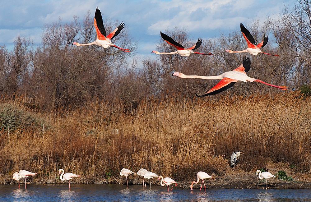 lake kerkini birding holiday from bulgaria