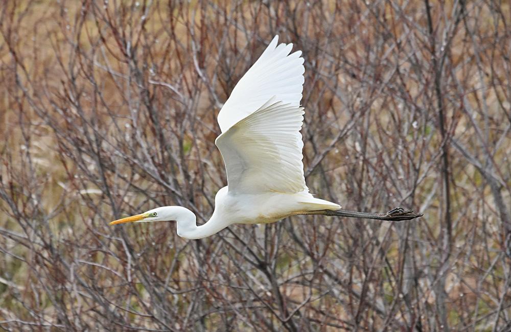 birding tours in bulgaria