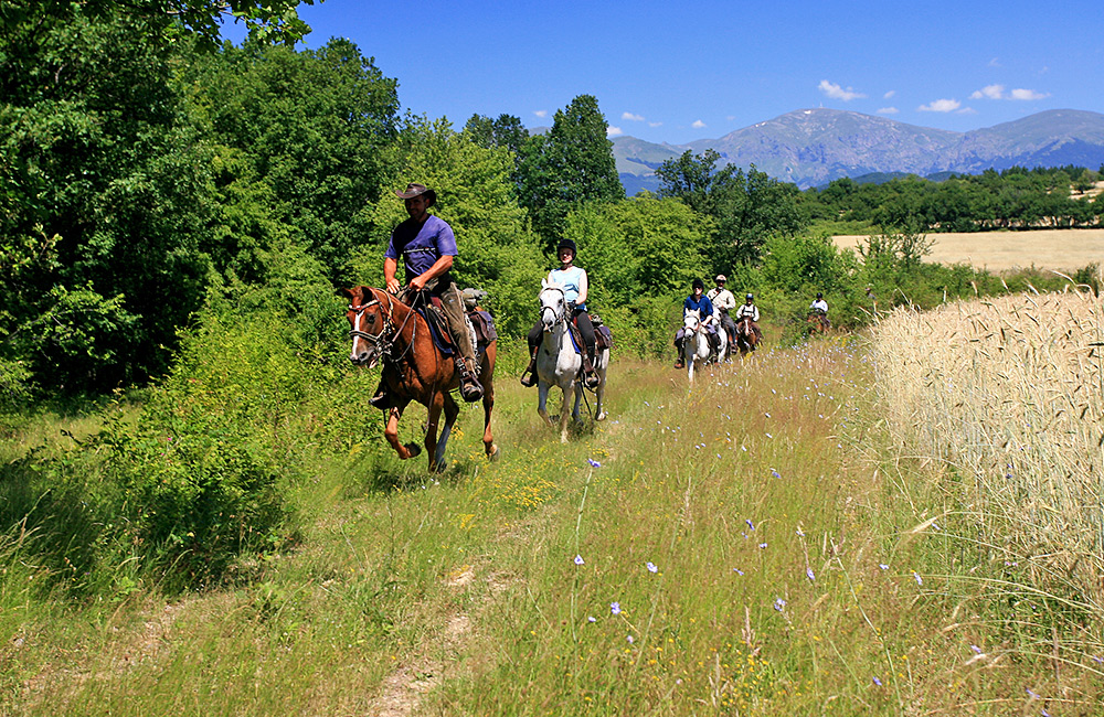 riding horses in bulgaria