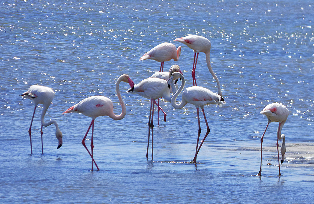 lake kerkini birdwatching tour from bulgaria