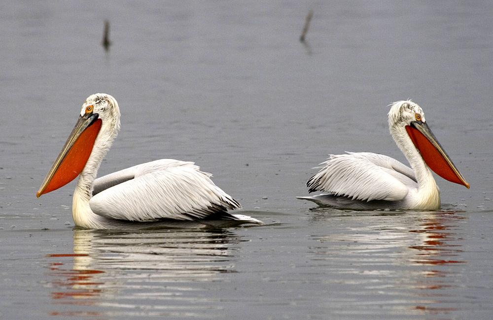 lake kerkini one-day birding tour from sofia
