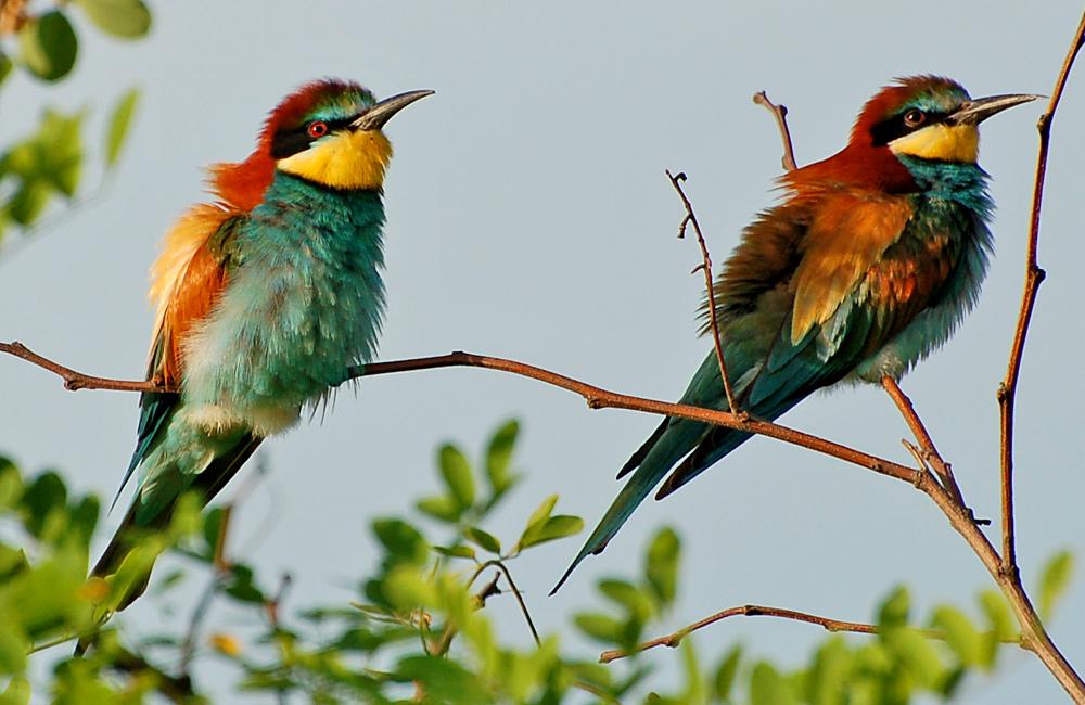 birdwatching holidays in bulgaria