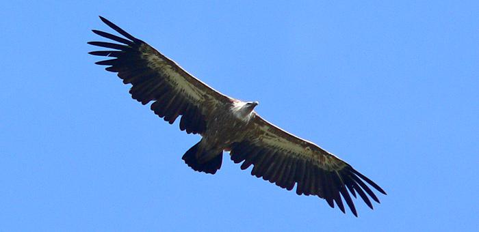 spring birdwatching tour of bulgaria