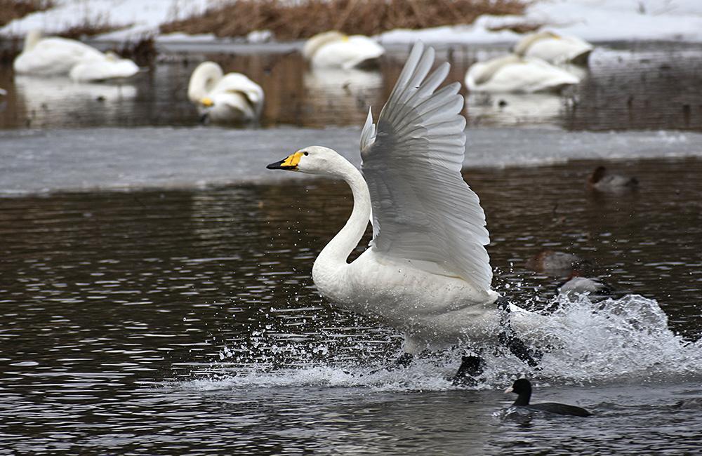 birdwatching in bulgaria in winter