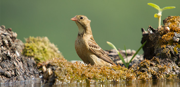 bird photography hide near sofia, bulgaria